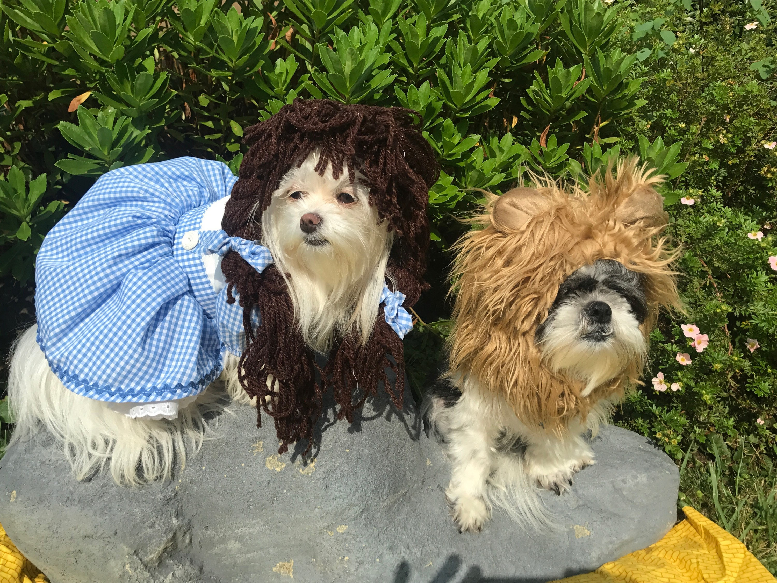 : wizard of oz dog costume  - Germanpascual.Com