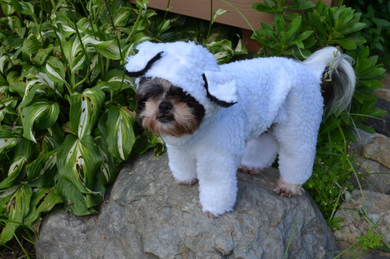 little bo peeps lost sheep halloween petdog costume size small medium large