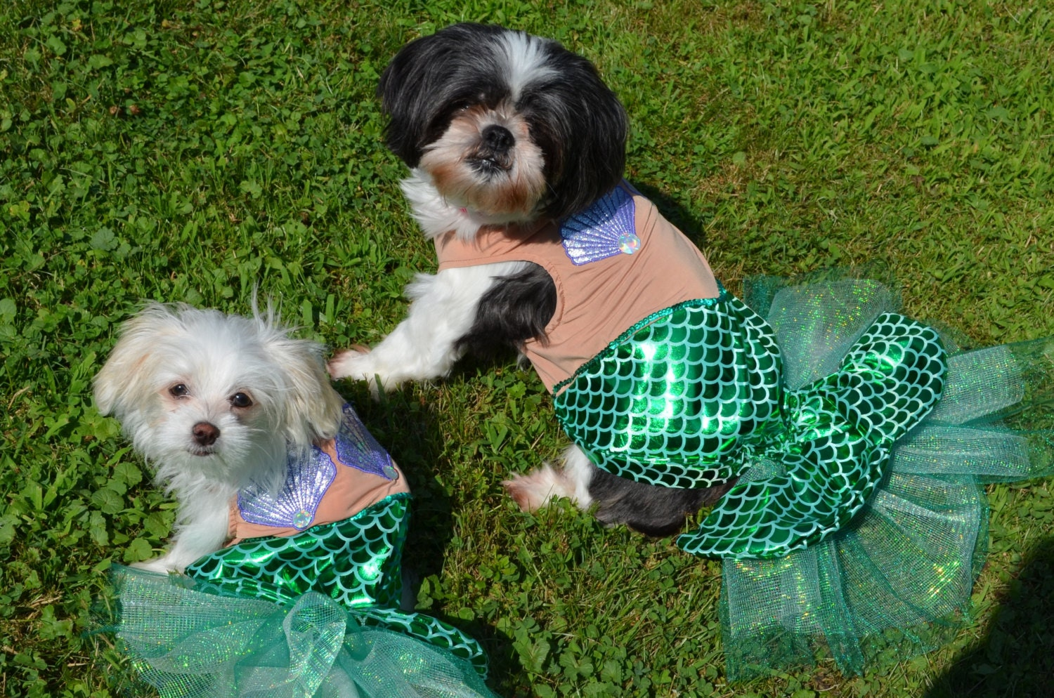 unique and awesome smaller breed only mermaid dog halloween costume size xsmall large