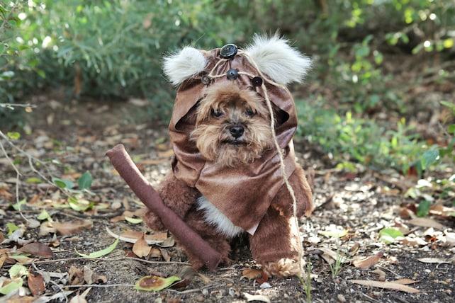 Disfraz de Ewok para perro, Star Wars