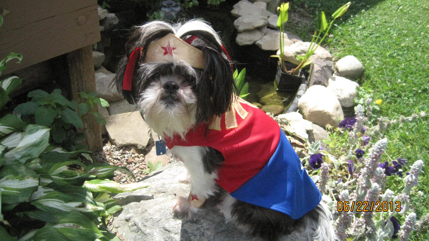 & Wonder Woman inspired Dog Costume/Outfit Size Extra Small- Extra Large