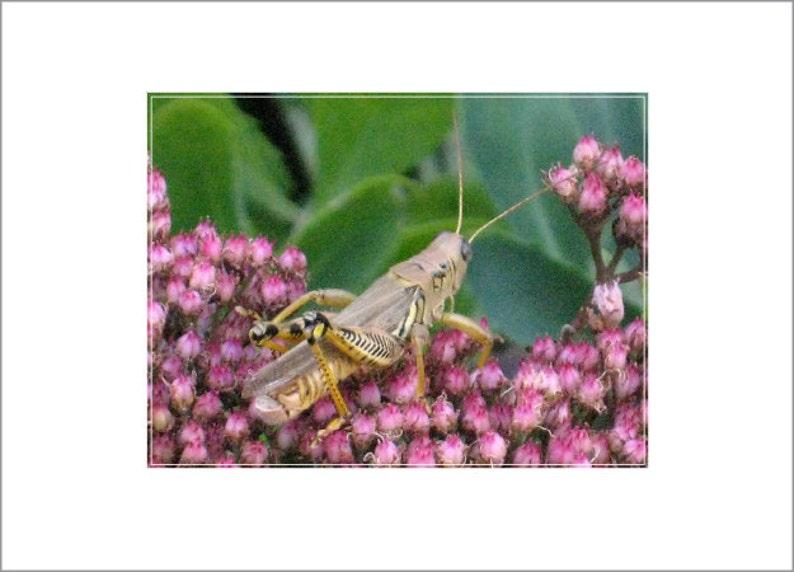 Grasshoppa image 0