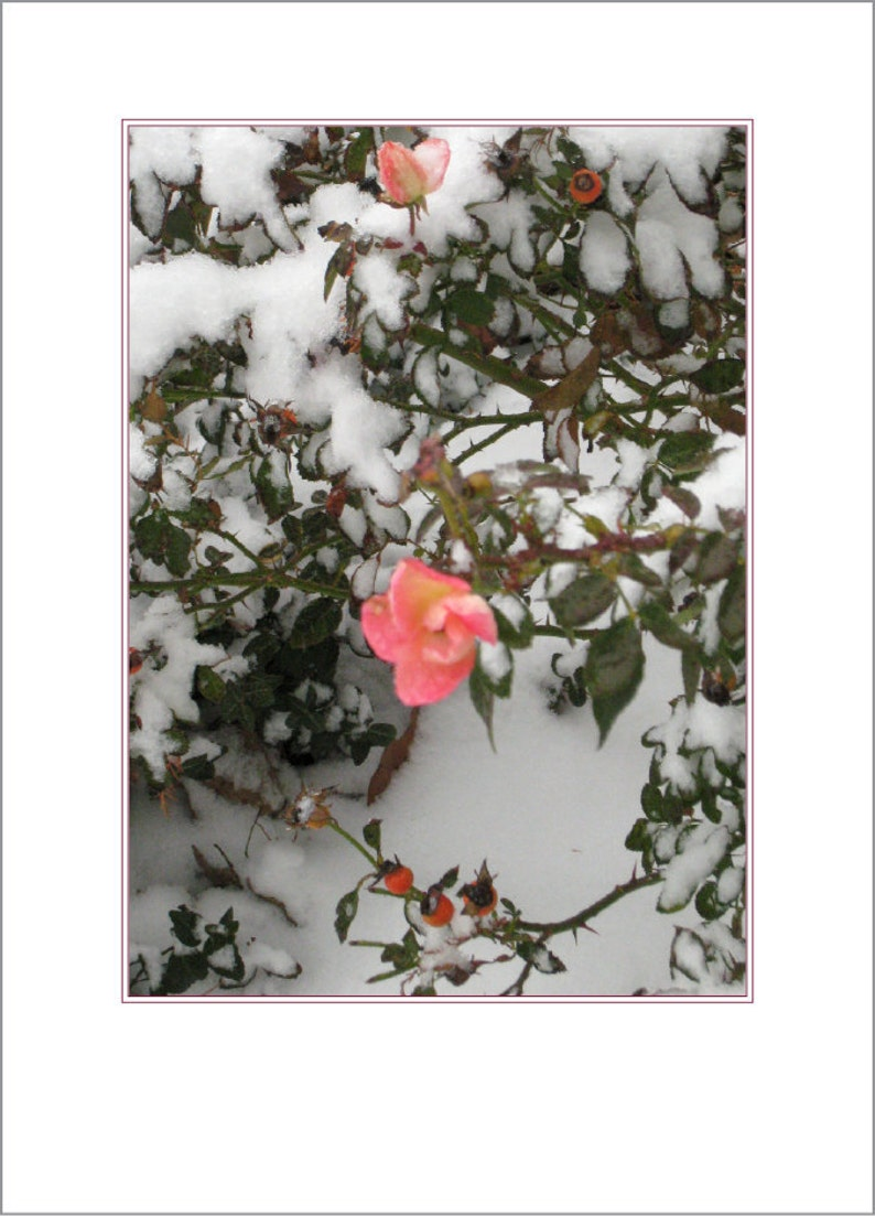 Roses in Snow image 0