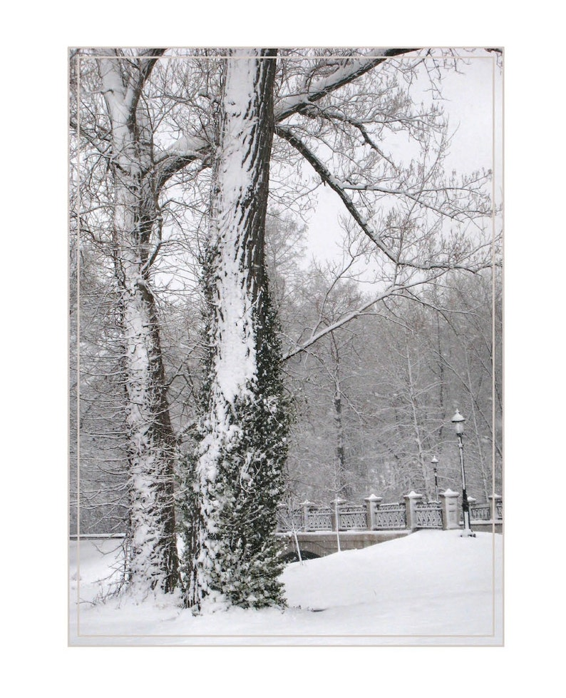 Winter Trees near the MUNY Forest Park image 0