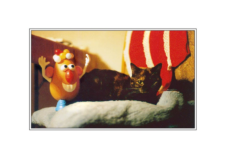 Cleo Meets Mr. Potato Head image 0