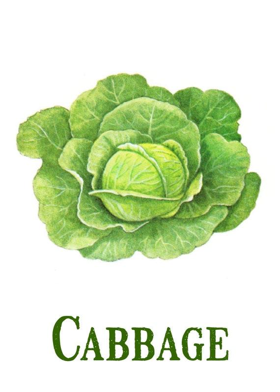 Cabbage Printable Vintage Cabbage Print Digital Download Etsy