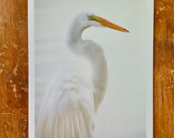 EGRET GRACE | 4 x 6 Photo on Thick Professional Card Stock | Free Shipping