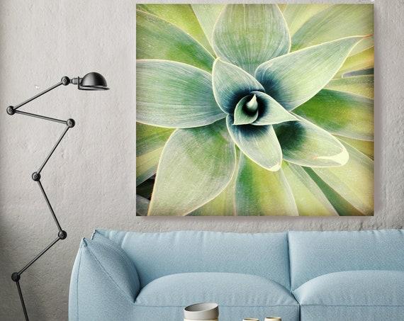Light at Sunset. Succulent, Succulent Wall Art, Succulent Print, Kitchen Print, Plant Print, Cactus Print, Succulent Canvas Print