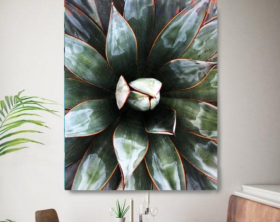 Agave - Tropical Star 4, Agave Wall Decor, Cactus print, Succulent Decor, Tropical Photography, Tropical Canvas Print