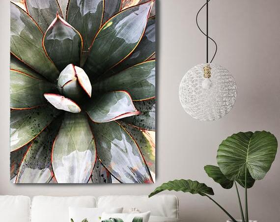 Tropical Star 2, Agave Wall Decor, Cactus print, Succulent Decor, Tropical Photography, Tropical Canvas Print