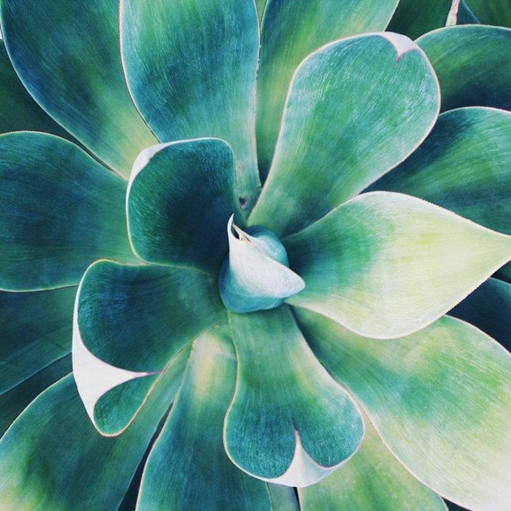 Succulent. California Beauty. Canvas Print by Irena Orlov