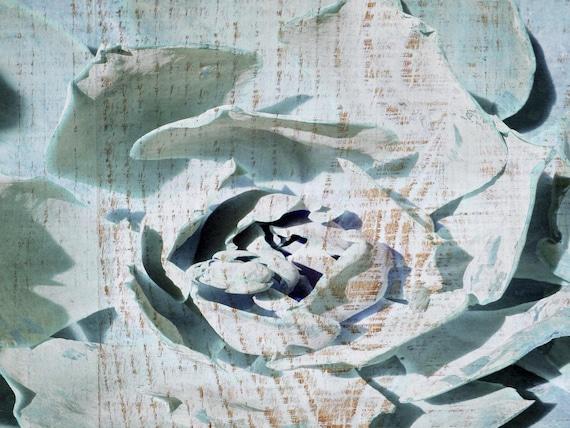 Succulent Blossom. Canvas Print by Irena Orlov