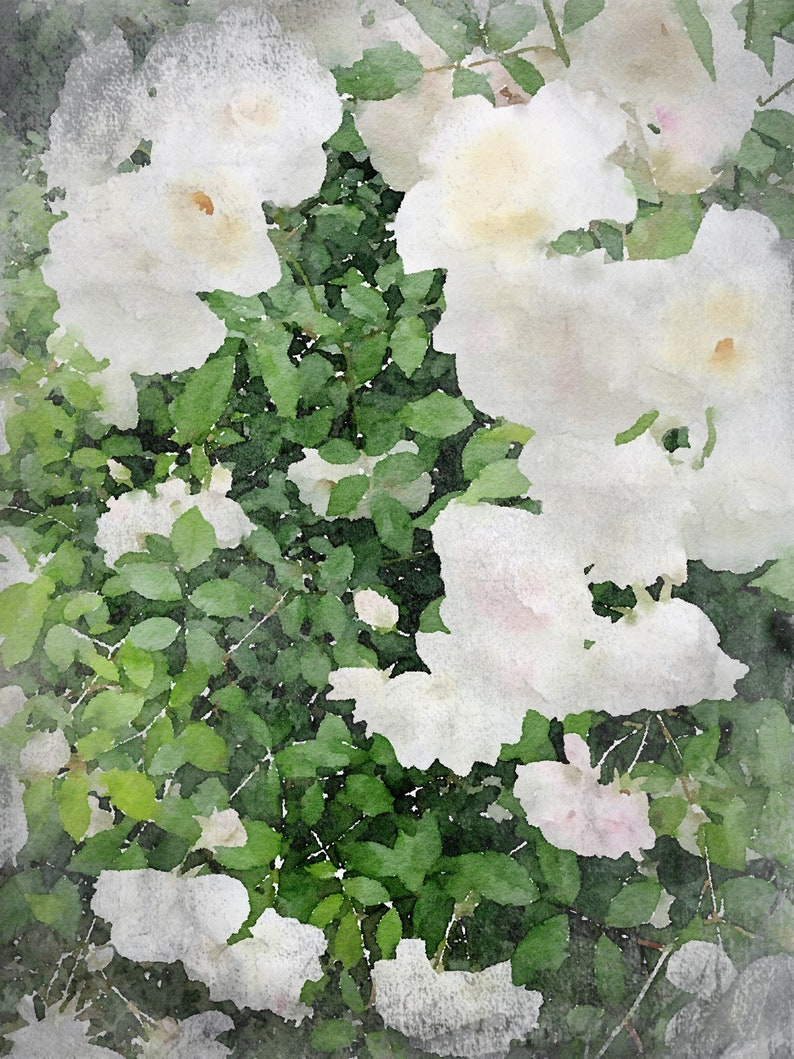 Shabby Chic canvas print Floral Painting Rustic Roses watercolor painting Modern Painting pretty Impressionist Painting Roses Painting