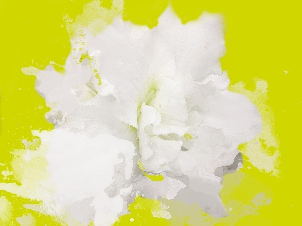 Soft And White Floral Painting White Abstract Art Wall Etsy