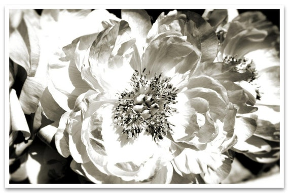 """White Peony. Floral Painting, White Abstract Art, Wall Decor, Large Abstract Colorful Contemporary Canvas Art Print up to 72"""" by Irena Orlov"""