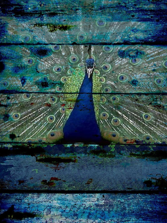 "Peacock 3. Extra Large Peacock Blue Green Rustic Canvas Art Print up to 72"", Large Bird Wall Decor, Peacock Wall Decor by Irena Orlov"