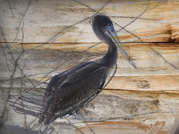 """Pelican. Extra Large Canvas Art Print up to 60 """", Bird on Wood Rustic Canvas Print, Grey Black Natural canvas wall decor by Irena Orlov"""
