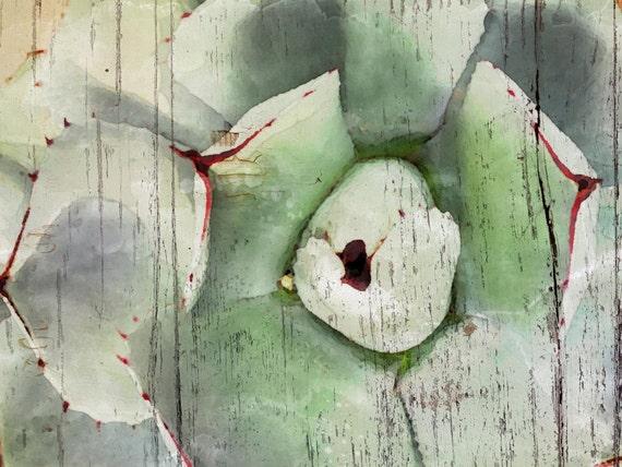 Succulent Beauty. Large Canvas Succulent Print, Large Canvas Wood Botanical Print, Home Decor Succulent Wall Art by Irena Orlov