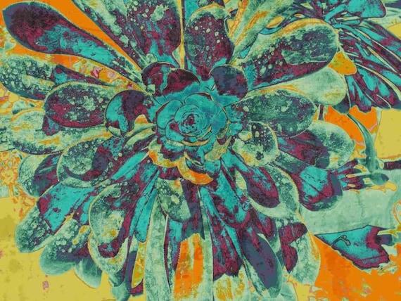 "Sempervimum. Canvas Print by Irena Orlov 24x36"""