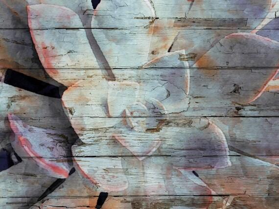 Succulent Favor.  Canvas Print by Irena Orlov