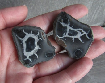 Black Septarian Nodule Pair with Polished Front M67
