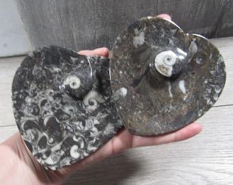Ammonite Fossil Heart Shape Bowl Q41