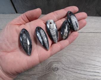 Orthoceras Fossil Focal Bead J104
