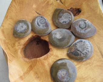 Fossils & Geodes
