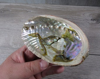 Abalone Shell Smudging 4 - 5 inch M145