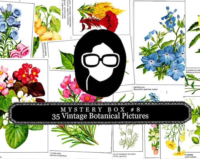 Mystery Box #8 -  35 Vintage Botanical Pictures - LIMITED QUANTITIES