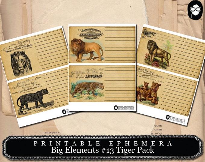 Safari Printable - Big Elements #13 Tigers - 3 Page Instant Download - lion print, lion animal print, safari animals, journaling cards