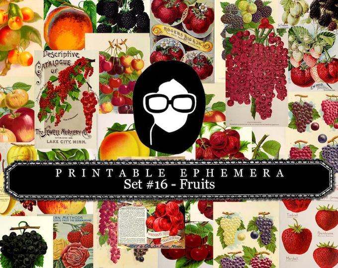 Ephemera Paper Pack - Printable Ephemera Set #16 - Fruit Art - 30 Pg Instant Download - blank journal cards, digital journal kits, fruit