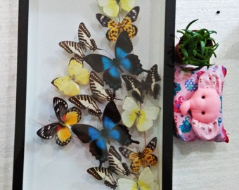Set Rare Real 15 Mounted Blue Butterfly Specimens Swallowtail Papilio Pericles Butterflies Art In Framed Bugs Taxidermy Wall Display Glass