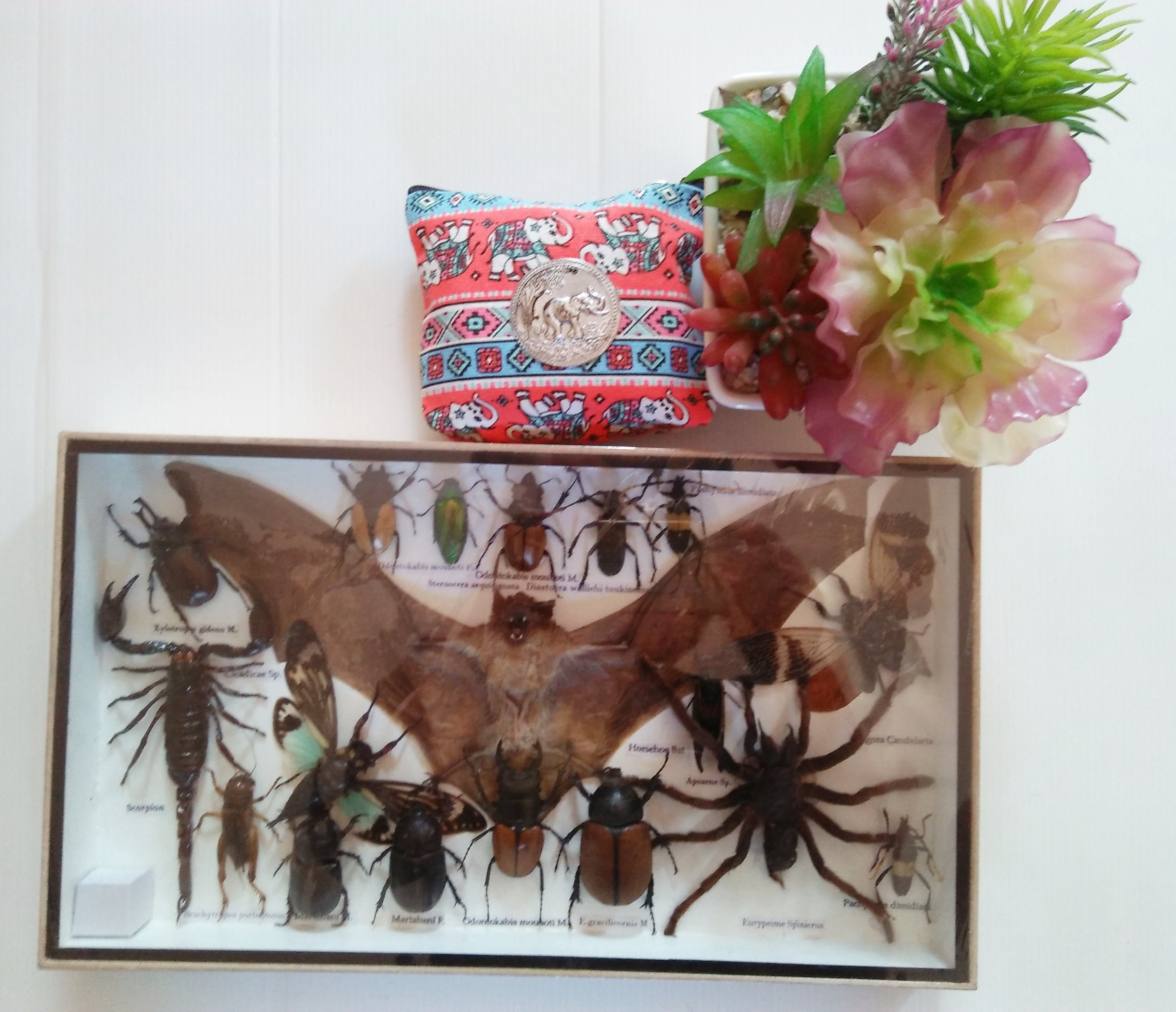 REAL EXOTIC BAT COLLECTION SPIDER SCORPION BUG INSECTS DISPLAY TAXIDERMY FRAME 2