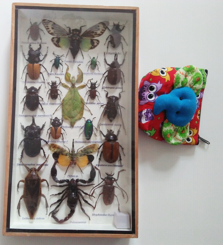 Echt seltene Insekten Insekten Bug Bugs gerahmt Display Box
