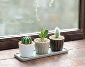 Set of 3 -mini Ceramic Planters with Tray,Ceramic Planter,Succulent Planter,Succulent Pot,Cactus Planter Container,Indoor Planter