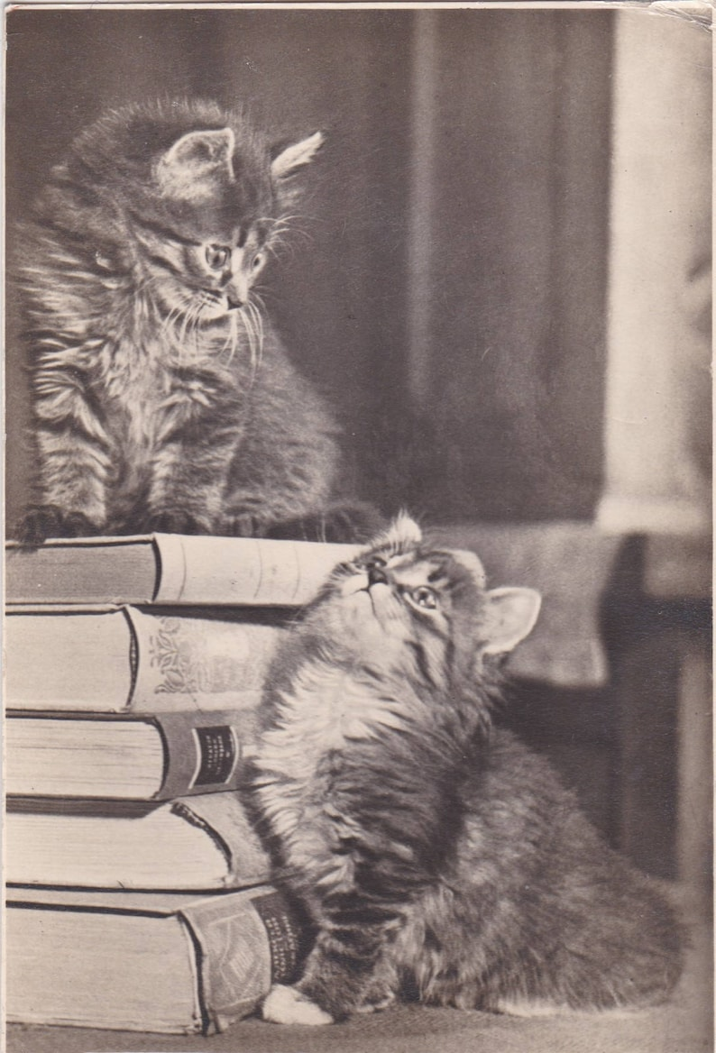 Kittens with a stack of books Vintage Soviet postcard 1956 image 0