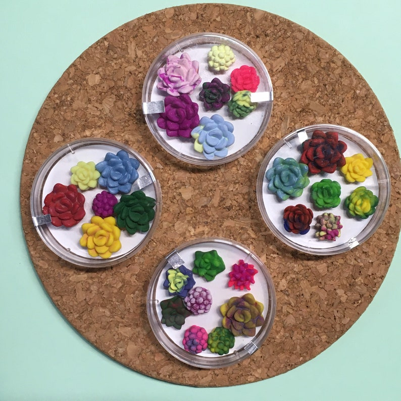 Succulent magnet set