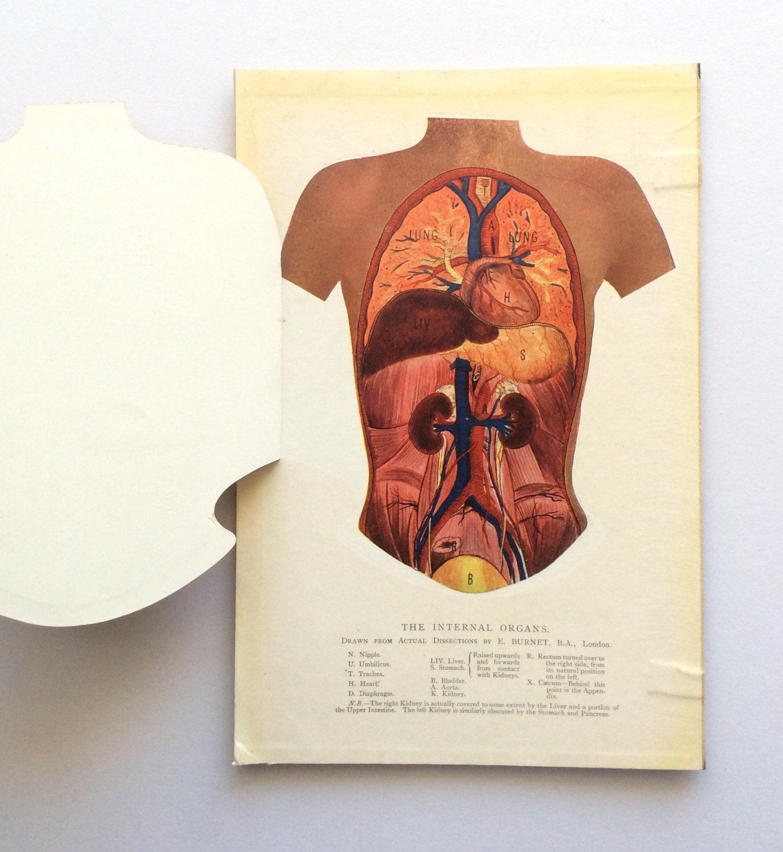Jahrgang 1920 medizinische Anatomie Diagramm ausklappbare | Etsy