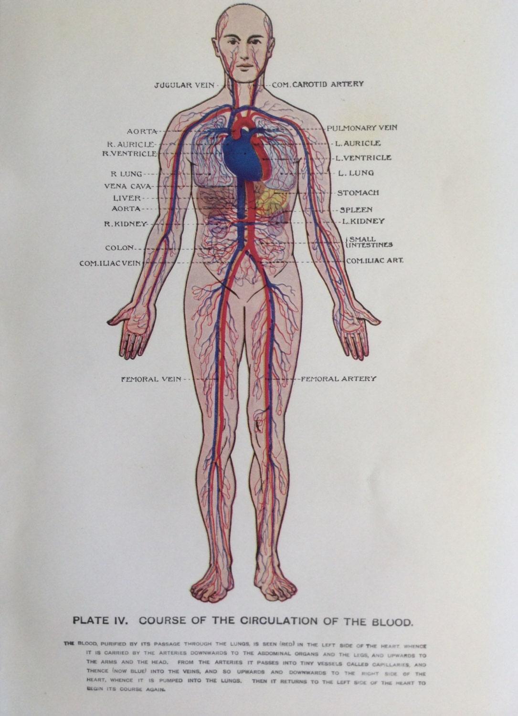 Jahrgang menschliche Anatomie Dissektion 1924 Exlibris Print | Etsy
