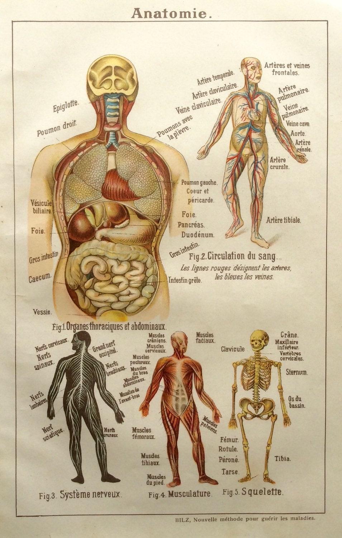 Antiguos de anatomía francés Bookplate impresión de 1900 | Etsy