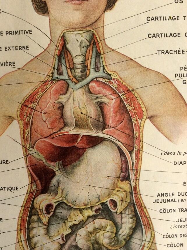 Vintage 1930s francés Bookplate imprimir anatomía humana | Etsy