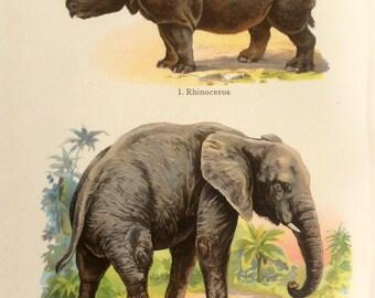 Antique 1909 ELEPHANT RHINOCEROS Bookplate Chromolithograph Print