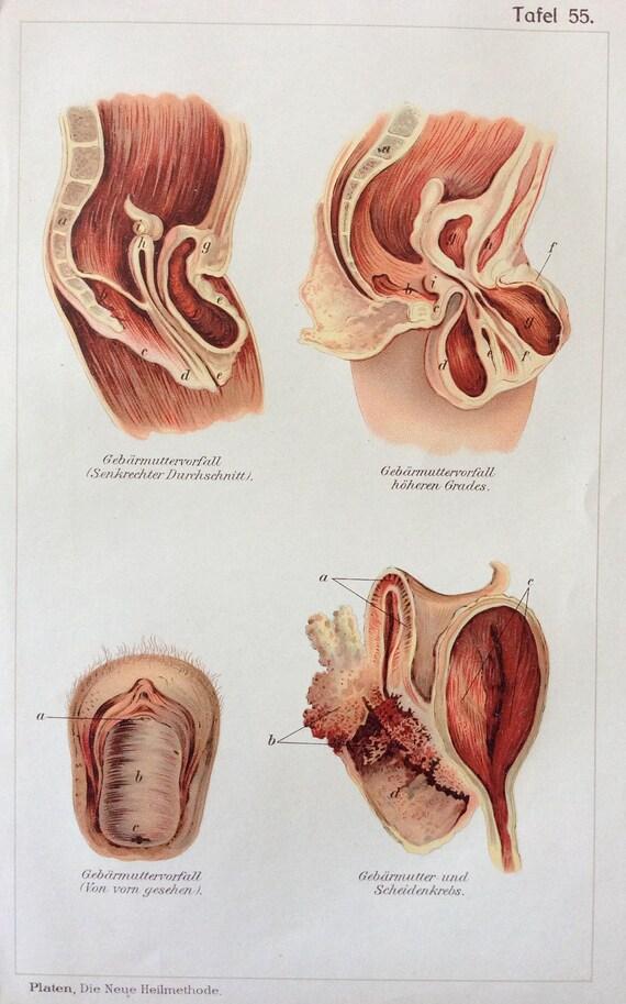 Anatomía médica alemana 1905 Vintage diagrama Bookplate | Etsy