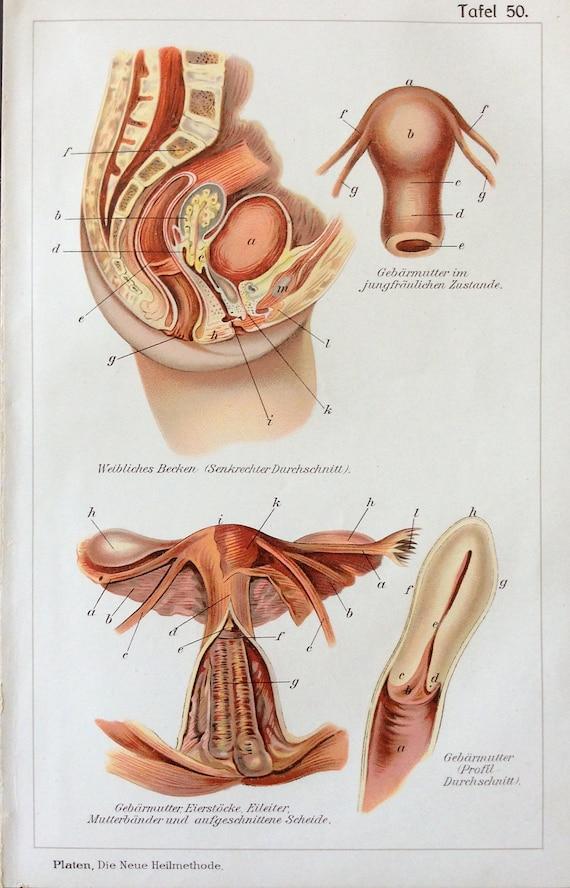 Groß Menschliche Anatomie Bauch Und Becken Weiblich Ideen - Anatomie ...