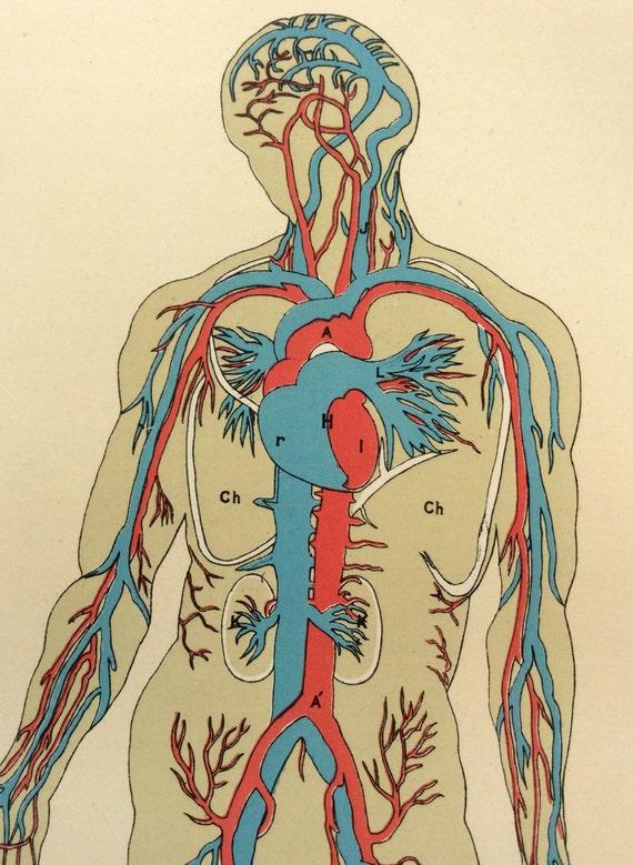 Original Vintage anatomía humana Bookplate victoriana grabado