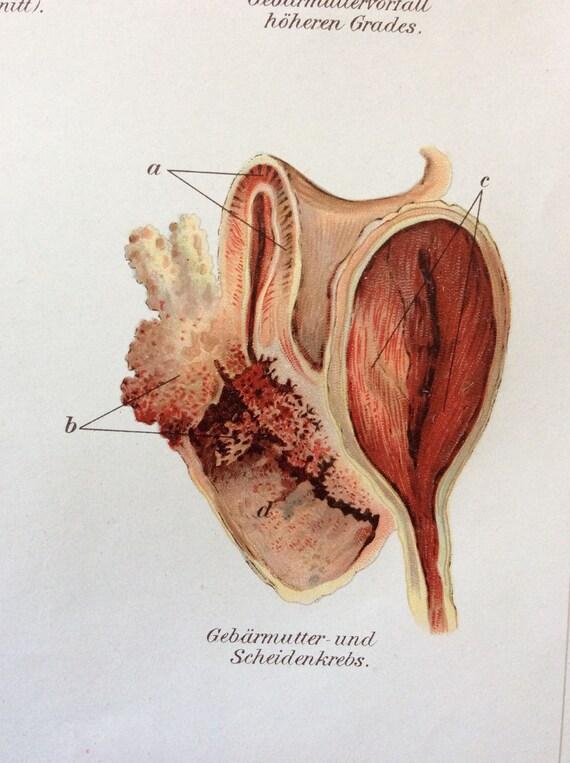 Jahrgang 1905 deutsche Medizin Anatomie Diagramm Exlibris | Etsy