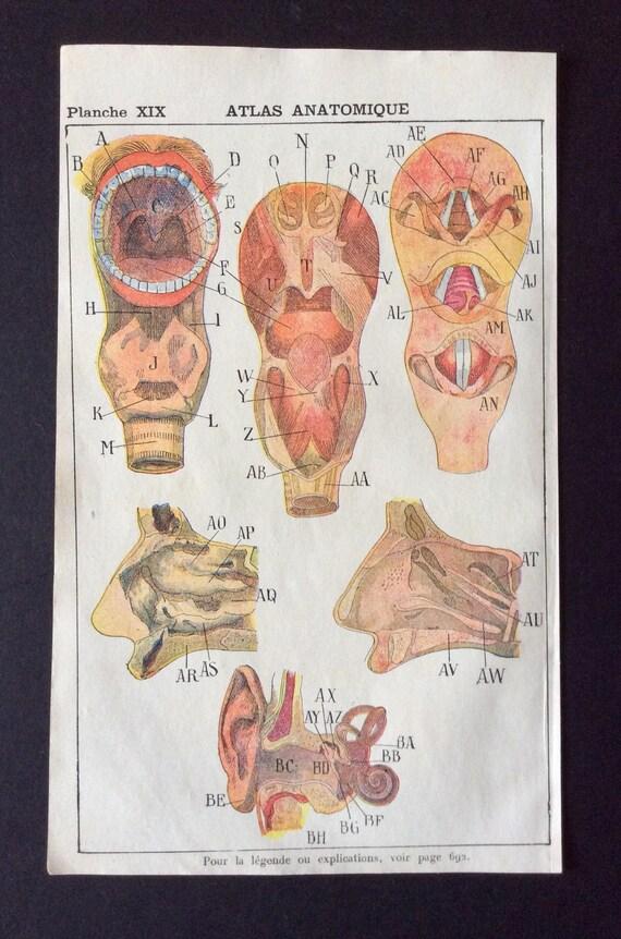 Antike französische Anatomie Exlibris Druck 1910 olfaktorische   Etsy