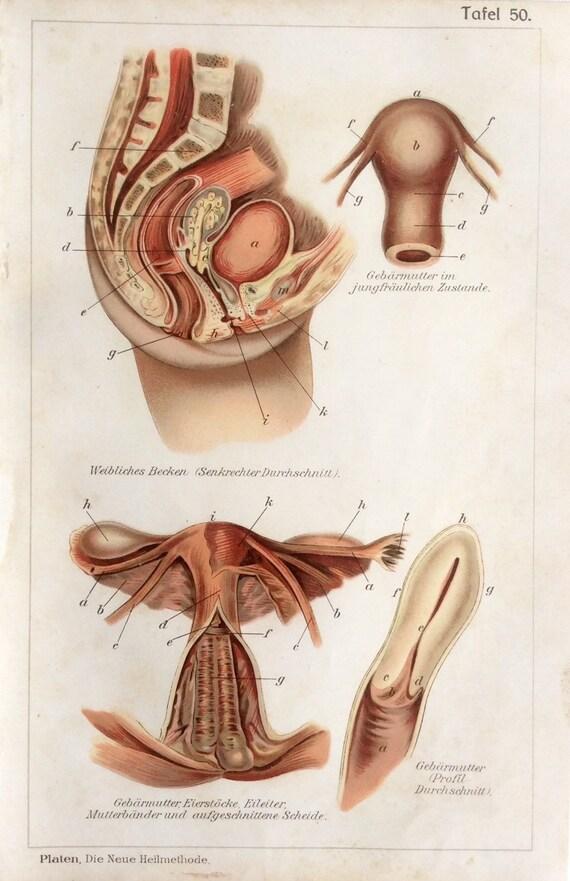 Vintage 1907 anatomía médica alemana diagrama Bookplate cuerpo