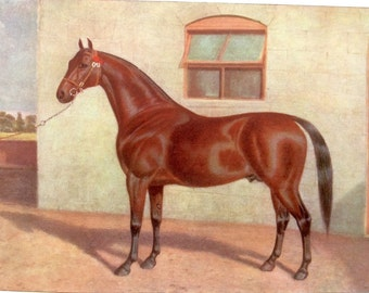 Antique 1906  Bookplate Print Coach Horse Dressage Equine
